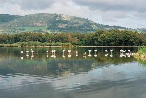 Paarl Bird Sanctuary