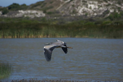 Rondevlei Nature Reserve, Cape Town Birding