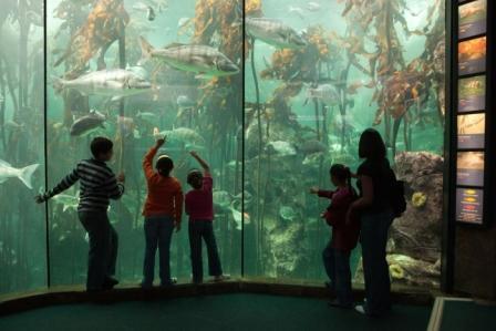 Kelp Forrest at Two Oceans Aquarium, Cape Town