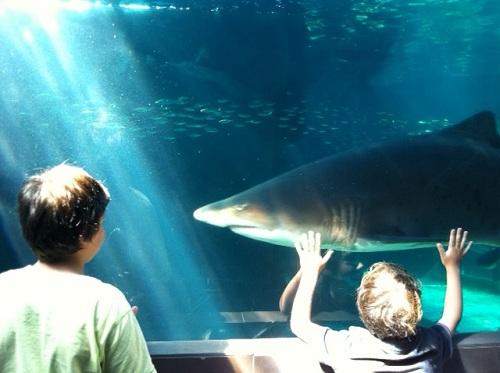 The Predator Exhibit at Two Oceans Aquarium, Cape Town