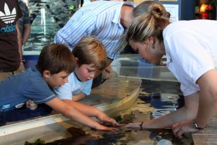 Touch Pool at Two Oceans Aquarium, Cape Town
