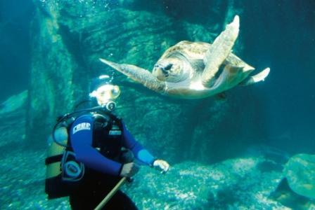 Loggerhead Turtle in The Predator Exhibit at Two Oceans Aquarium, Cape Town